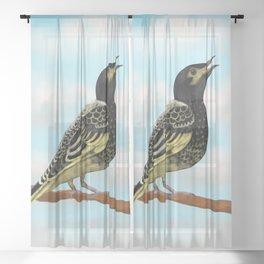 The Regent Honeyeater - Australian Precious Bird Sheer Curtain