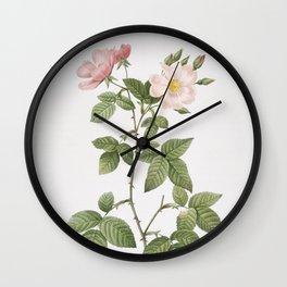 Vintage Red Bramble Leaved Rose Illustration Wall Clock