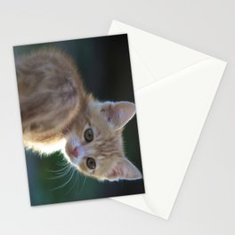 Gatto Rosso - Red Cat Stationery Cards