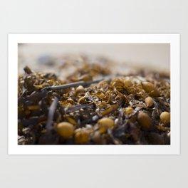 Sea Weed Art Print