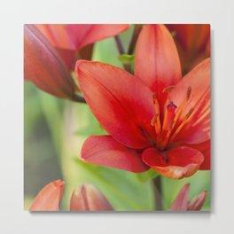 Flowering Lily Metal Print