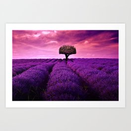 Pink Sunset in Fields of Lavender portrait Art Print