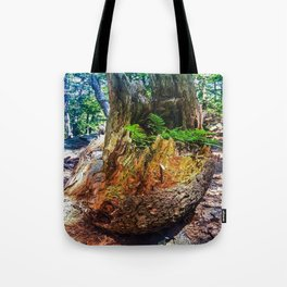 From Old to New Tote Bag
