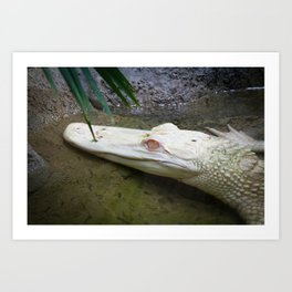 a pretty handsome alligator Art Print