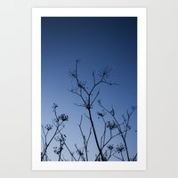 night sky Art Prints featuring Night Sky by Shy Photog