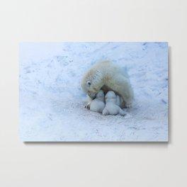 Polar Bear mom feeding twins cubs. Metal Print