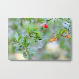 Strawberry tree fruits Metal Print