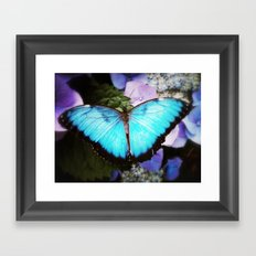 Morpho Bleu Framed Art Print