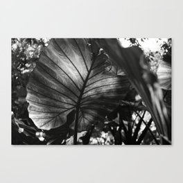 In the light Canvas Print