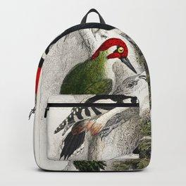 Ivory Billed Woodpecker Green Woodpecker Great Spotted Woodpecker and Lesser Spotted Woodpecker from Backpack