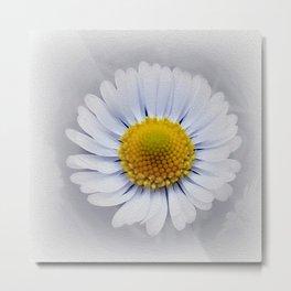 shining white daisy Metal Print