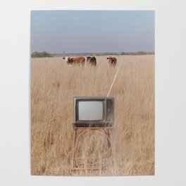 Cow TV Poster