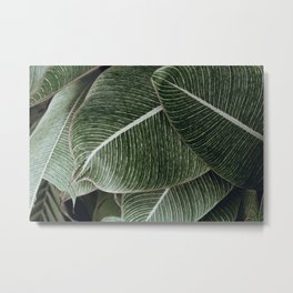 tropical xxiv Metal Print