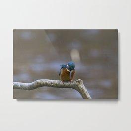 Kingfisher in the rain Metal Print