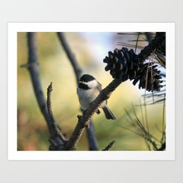Beautiful chickadee on the pine branch in October Art Print
