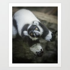 Lemur In The Glass Art Print