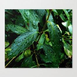 Greenery and leaf I Canvas Print