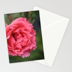 pink wild rose flower in green background. Floral photography. Stationery Cards
