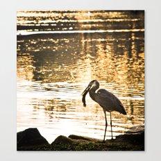 Great Blue Heron (Eats A Fish) Canvas Print