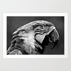 Black & White Parrot  Art Print