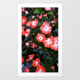 Pink Pleasures Art Print