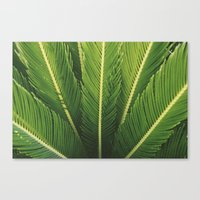 palm tree Canvas Prints featuring palm tree by Life Through the Lens