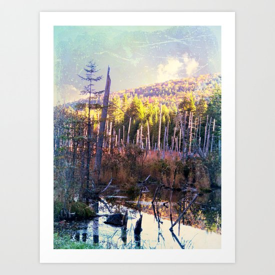 Inside the North Woods of Maine Art Print