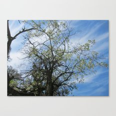 One Day there'll be a Place for Us Canvas Print
