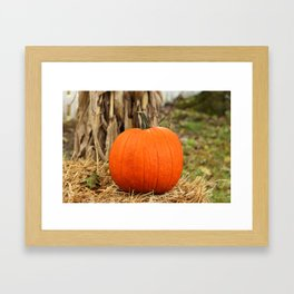 Pumpkin and the leaf Framed Art Print
