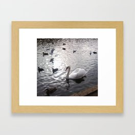 Swan 1 with other birds Framed Art Print