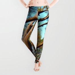 Madrone Leggings