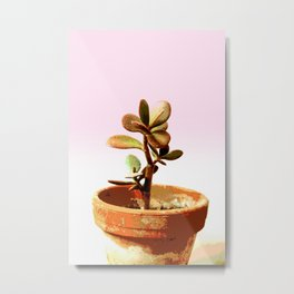 Little succulent money plant in pot Metal Print