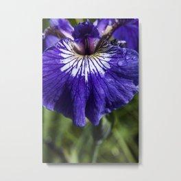 Wild Iris Petal Photography Print Metal Print