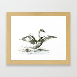 Cygnet Framed Art Print