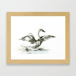 Cygnet Framed Art Print