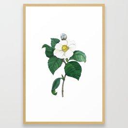 Japanese Camellia Framed Art Print