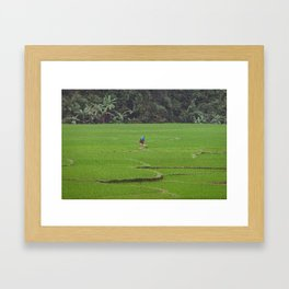 Rice Paddies in Kho Muong, Vietnam Framed Art Print