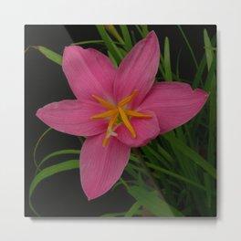 Pretty Pink Rain Lilies Metal Print