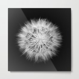 Black and White Dandelion Macro / Nature Photography Metal Print