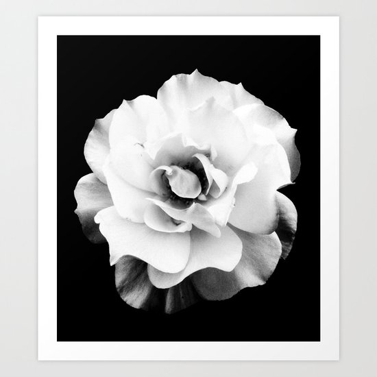 Black and White Rose Blossom... Art Print