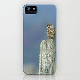Passerotto-young sparrow iPhone Case