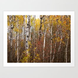 Autumn in Cheboygan, MI Art Print