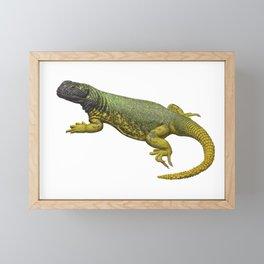 Phymaturus maulense Framed Mini Art Print