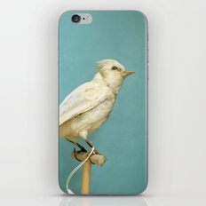 Albino Blue Jay - Square Format Natural History Bird Portrait iPhone & iPod Skin