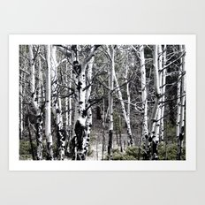 Aspen Trees with Subdued Colors Art Print