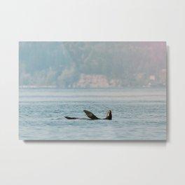 Sea Lion Basking in Puget Sound Metal Print