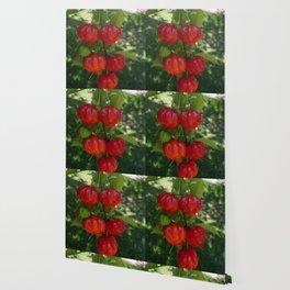 Fruta Pitangas Brasileiras !! Wallpaper