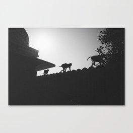 Monkeying Around Canvas Print