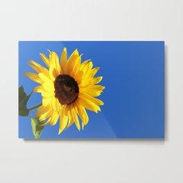 Sunflower, Hansville, WA Metal Print