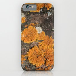 Orange you glad you're a lichen iPhone Case